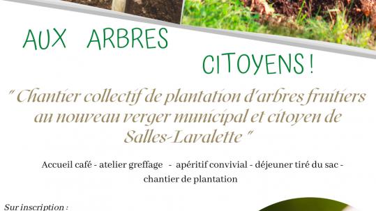 affiche plantation